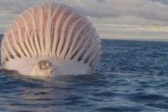 ¿Qué hace esta esfera gigante y maloliente en medio del océano?