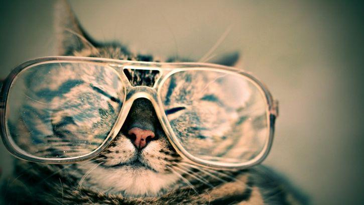 gato feliz con lentes
