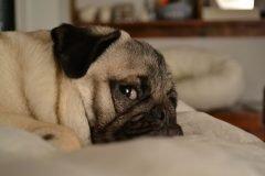 Estudio indica que tu perro realmente entiende lo que dices