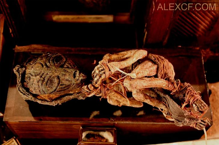 esqueletos-de-seres-fantasticos-1