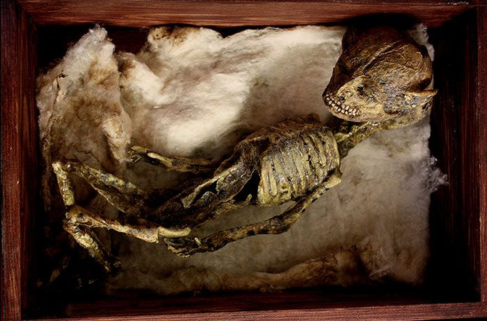 esqueletos-de-seres-fantasticos-11