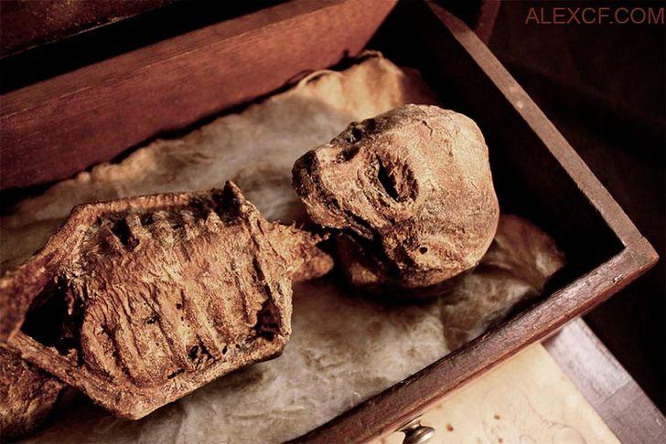 esqueletos-de-seres-fantasticos-14