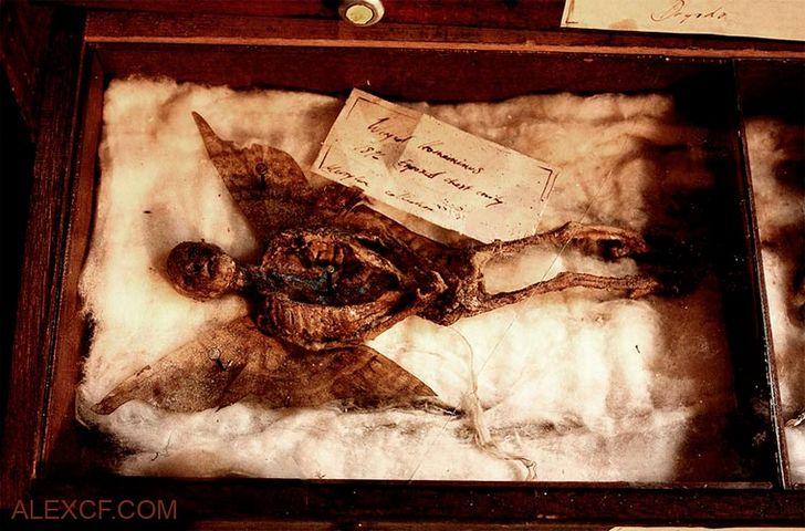 esqueletos-de-seres-fantasticos-15