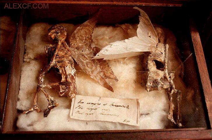 esqueletos-de-seres-fantasticos-17