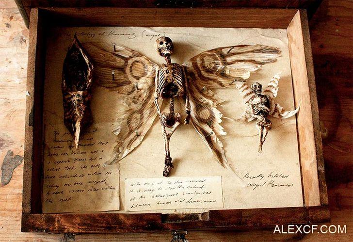 esqueletos-de-seres-fantasticos-19