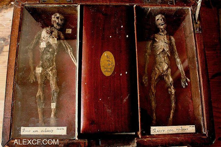 esqueletos-de-seres-fantasticos-20