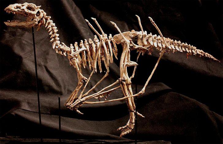 esqueletos-de-seres-fantasticos-24