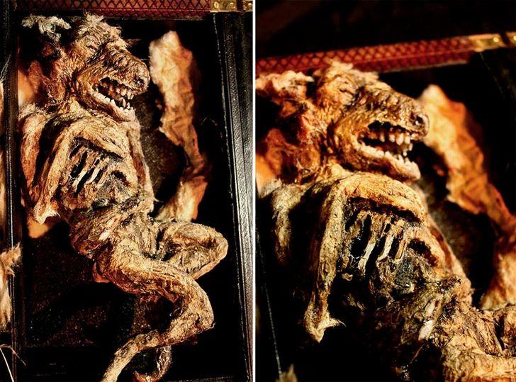 esqueletos-de-seres-fantasticos-28