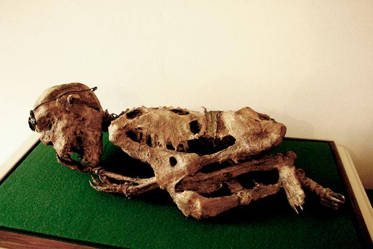 esqueletos-de-seres-fantasticos-3