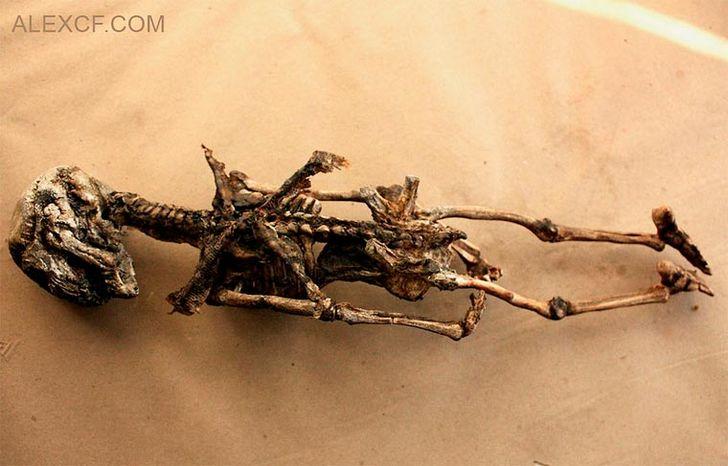 esqueletos-de-seres-fantasticos-5