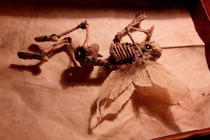 esqueletos-de-seres-fantasticos-9