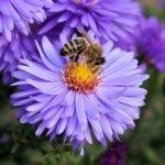 En Estados Unidos intentan erradicar el Zika y matan millones de abejas