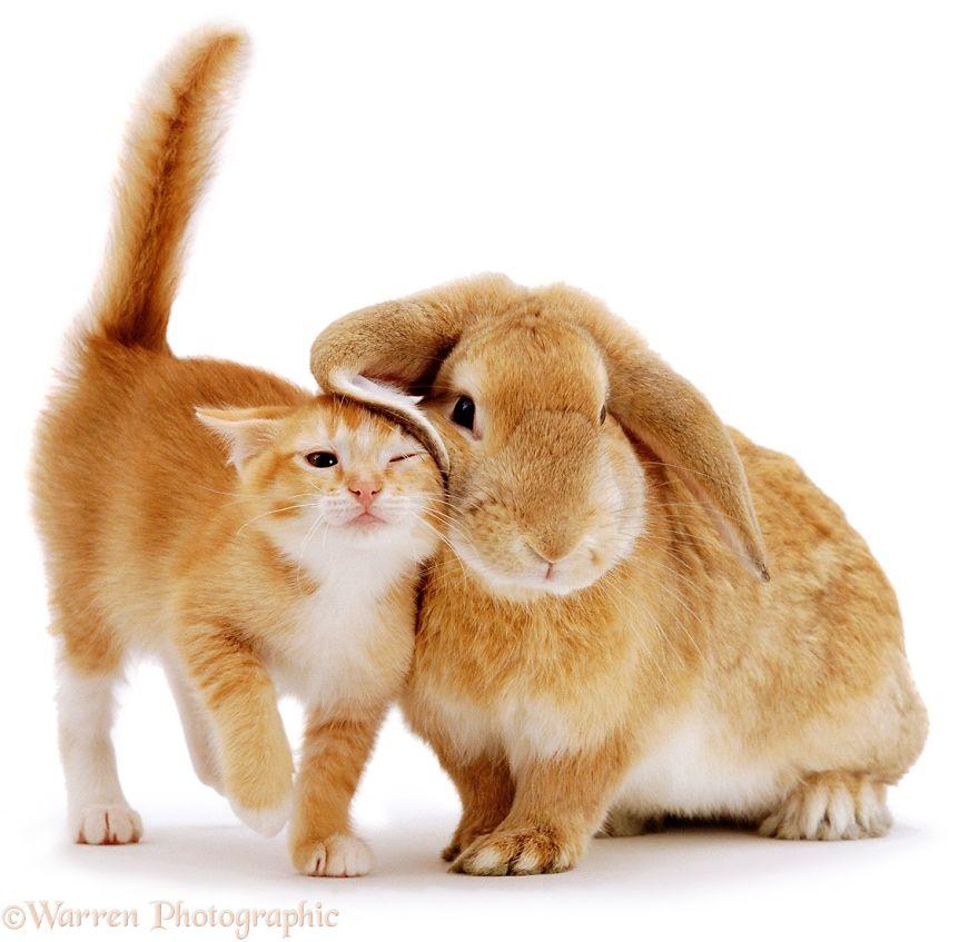 animales-hermanos-del-mismo-pelo-1