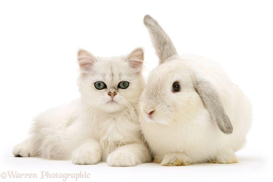 animales-hermanos-del-mismo-pelo-10