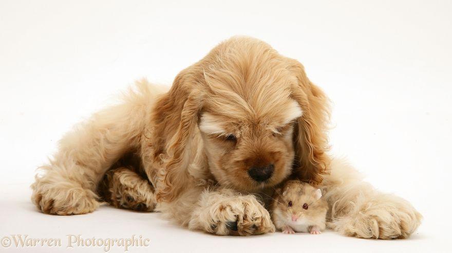 animales-hermanos-del-mismo-pelo-11