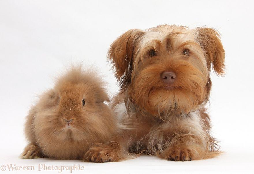 animales-hermanos-del-mismo-pelo-13