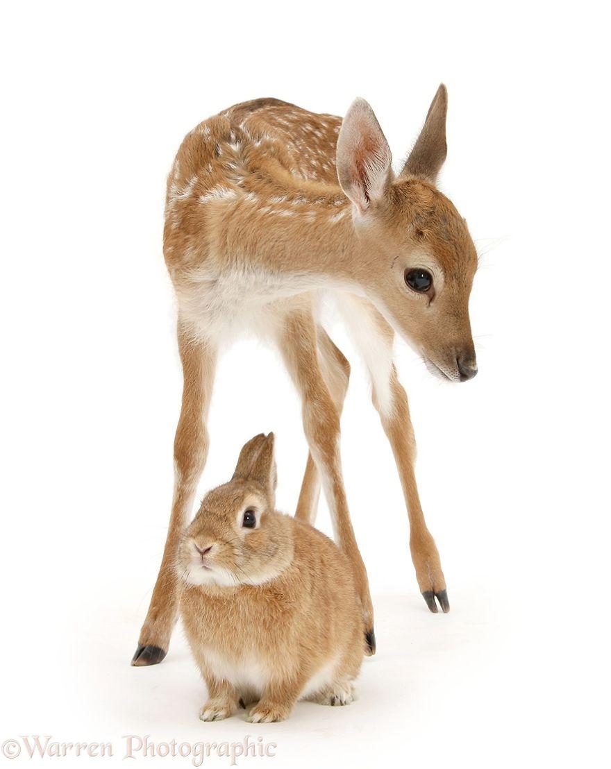 animales-hermanos-del-mismo-pelo-17