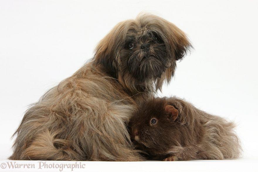 animales-hermanos-del-mismo-pelo-18