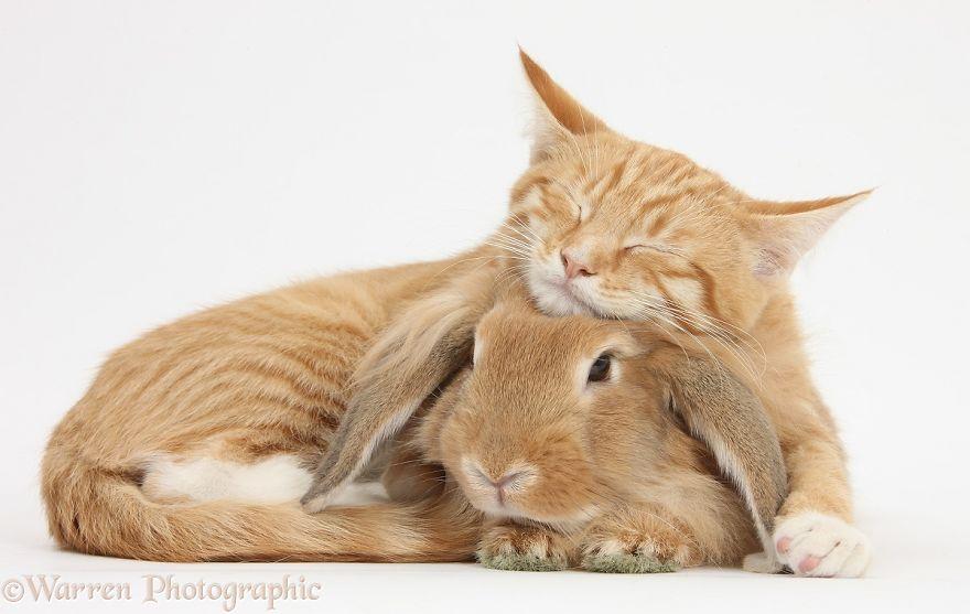 animales-hermanos-del-mismo-pelo-19