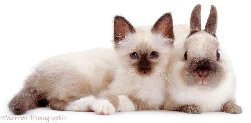 animales-hermanos-del-mismo-pelo-2