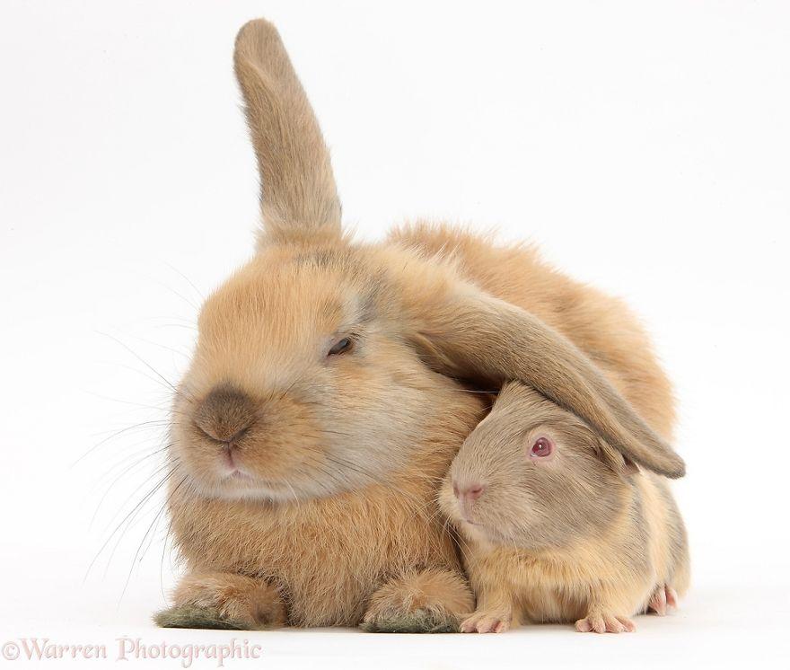 animales-hermanos-del-mismo-pelo-21