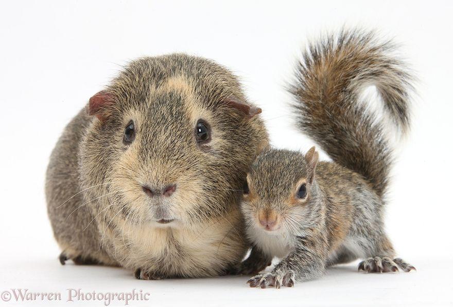 animales-hermanos-del-mismo-pelo-22