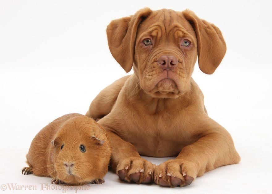 animales-hermanos-del-mismo-pelo-23
