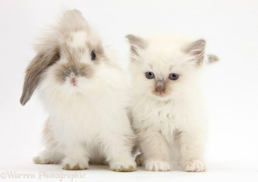 animales-hermanos-del-mismo-pelo-25