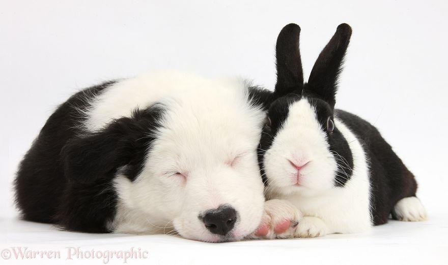 animales-hermanos-del-mismo-pelo-26