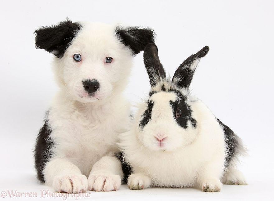 animales-hermanos-del-mismo-pelo-27