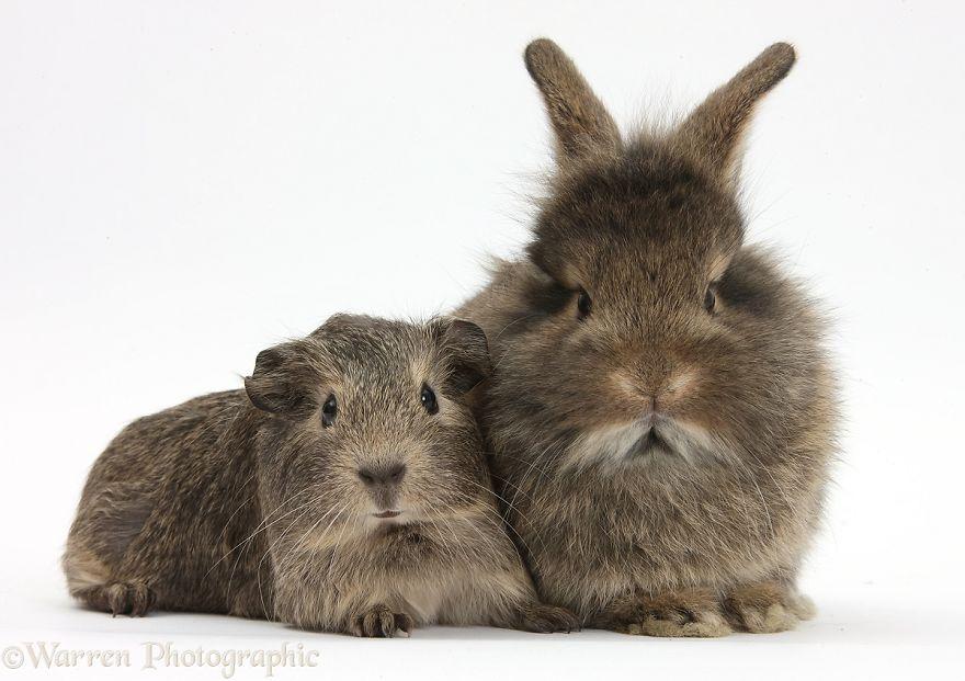 animales-hermanos-del-mismo-pelo-28