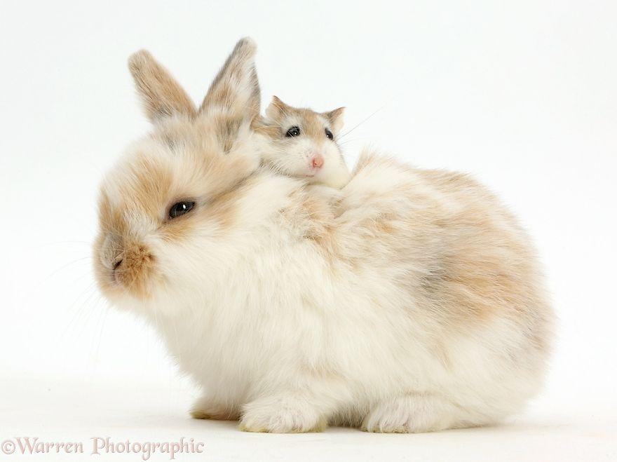 animales-hermanos-del-mismo-pelo-31