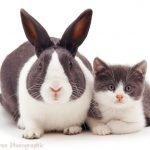 Fotógrafo captura animales con pelaje similar y el resultado es adorable