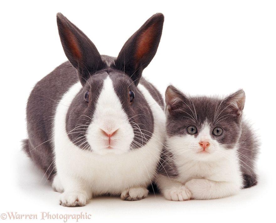 animales-hermanos-del-mismo-pelo-4