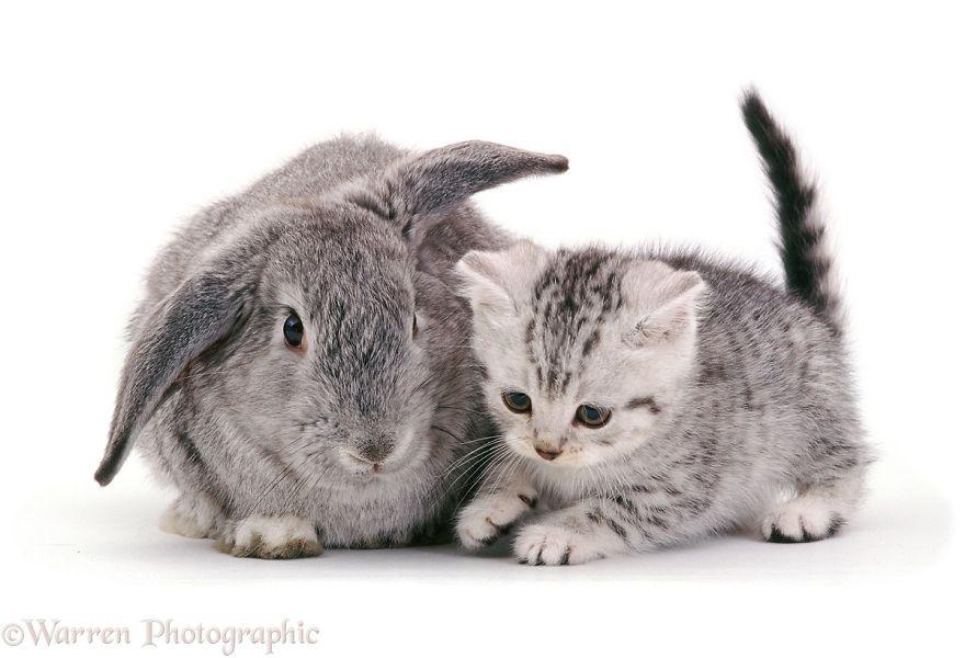 animales-hermanos-del-mismo-pelo-5