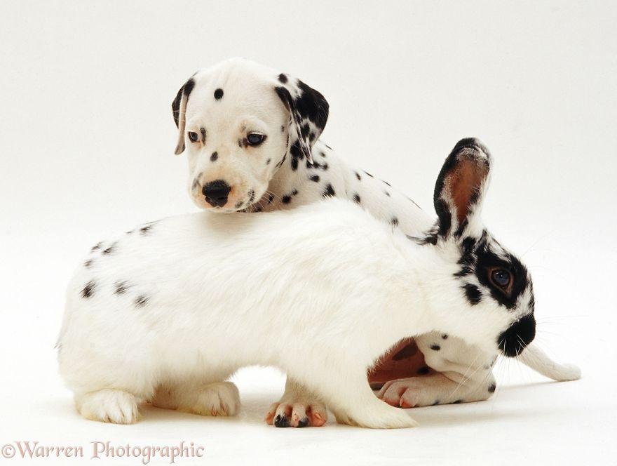 animales-hermanos-del-mismo-pelo-6