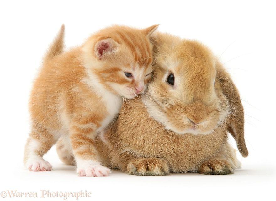 animales-hermanos-del-mismo-pelo-7