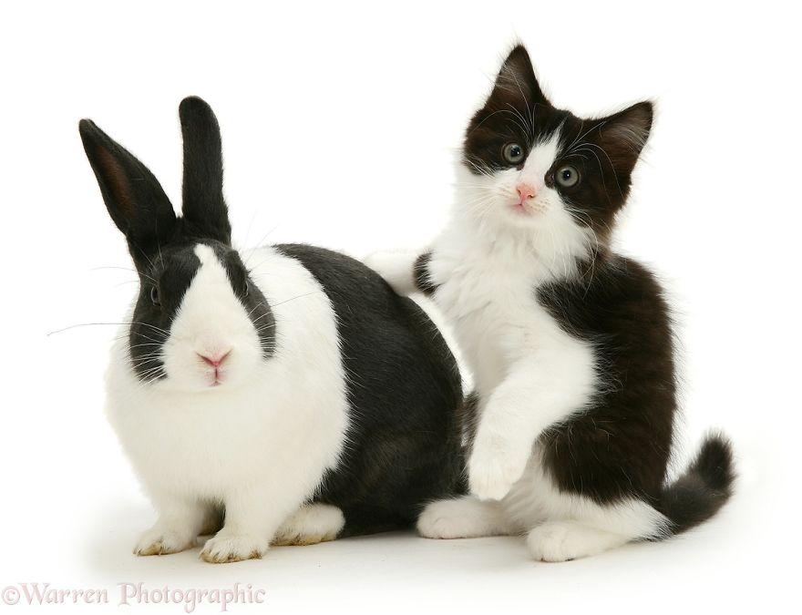animales-hermanos-del-mismo-pelo-8