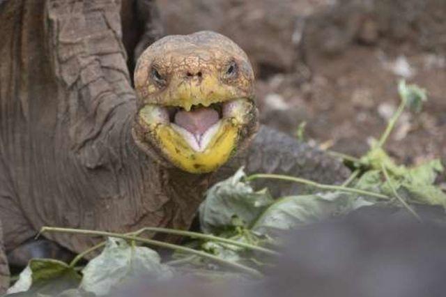 diego-tortuga-galapagos-1