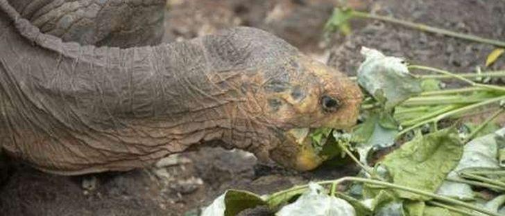 diego-tortuga-galapagos-3