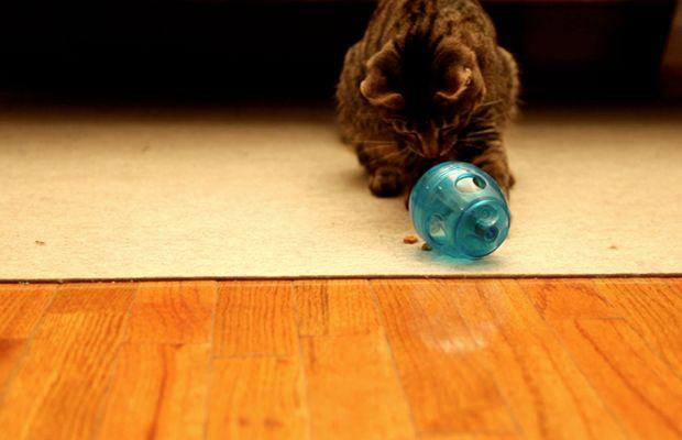 food puzzle cat purina