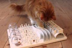 Un truco simple para hacer a tu gato más feliz y saludable