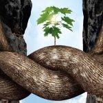 Los árboles pueden hacer amigos y cuidarse mutuamente