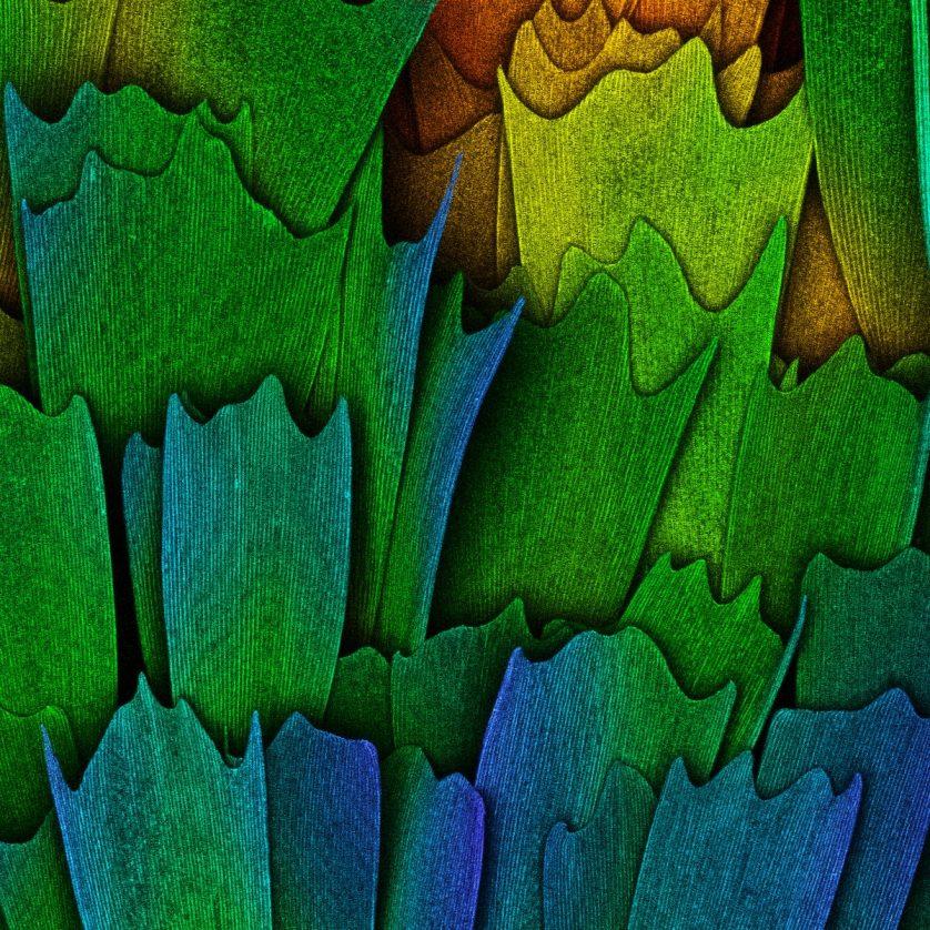 foto-micriscopica-ala-de-mariposa-838x838