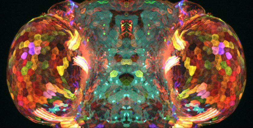 foto-microscopica-larva-pez-cebra-838x424