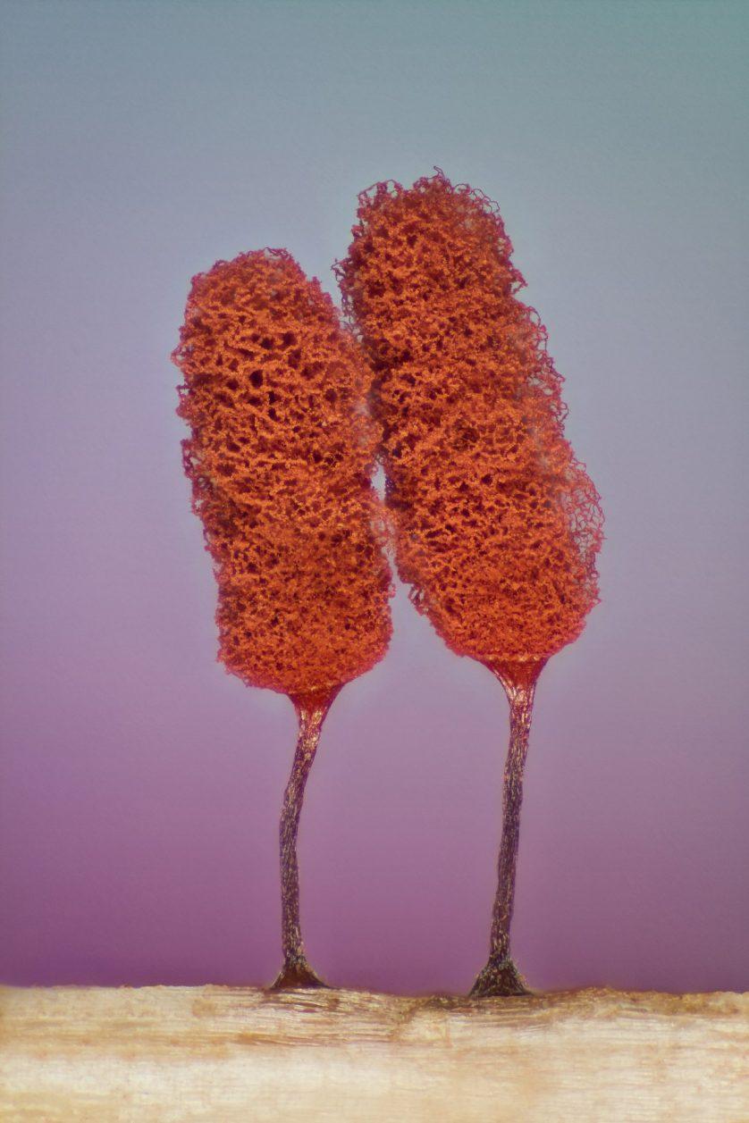 foto-microscopica-moho-838x1257