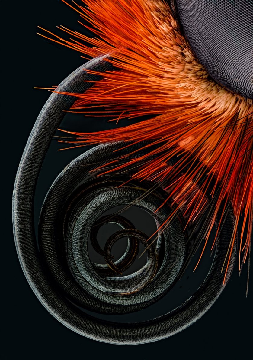 fotos-microscopicas-mariposa-838x1189