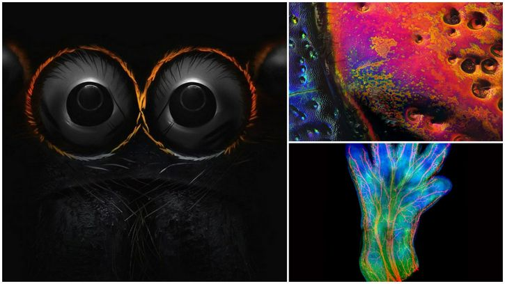 nikon-small-world-finalistas-2016