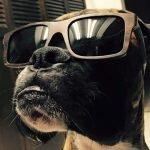 Jauría de perros destroza un automóvil en Turquía + VIDEOS