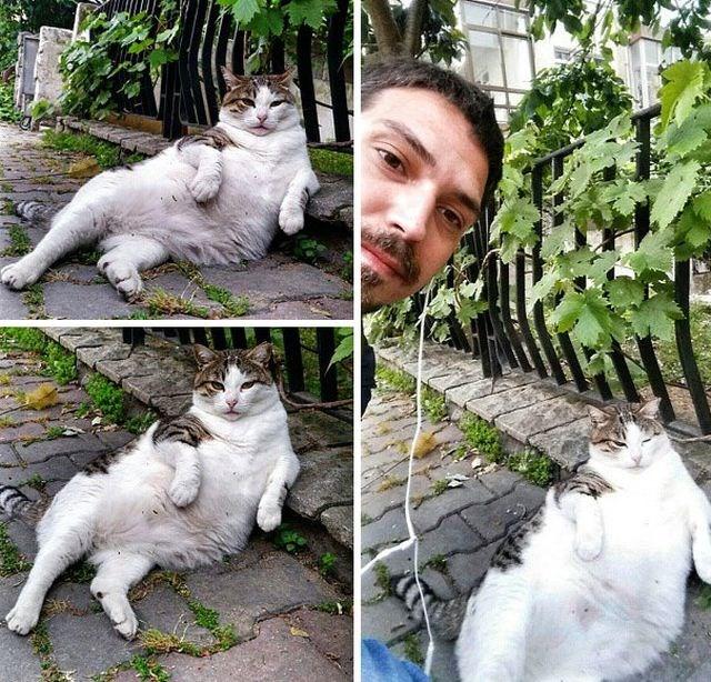 tombili-gato-estambul-1
